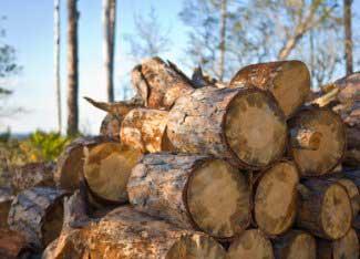 btu values of wood species